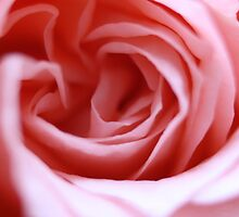 rose by zahnartz