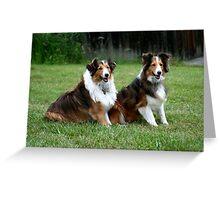Cassidy & Sundance III - Shelties/Shetland Sheep Dogs Greeting Card