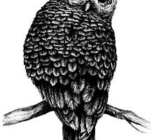 Hand Drawn Owl by Linn Warme