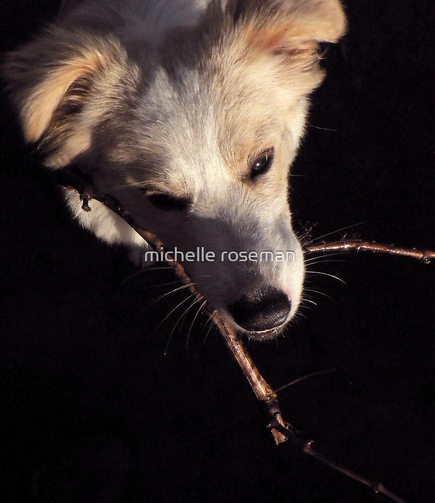 Devine Dog by michelle roseman