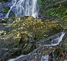 Dorrigo National Park... by Daniel  Smith