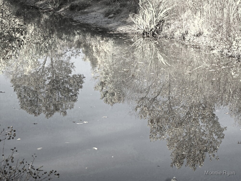 Wetlands Reflections by Monnie Ryan