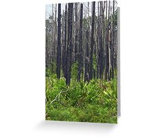 Burned forest Greeting Card