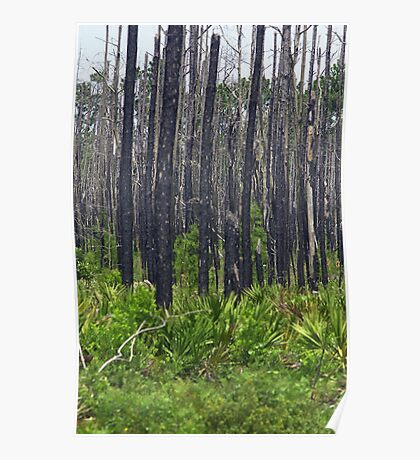 Burned forest Poster
