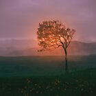 Foggy Rise by Neophytos