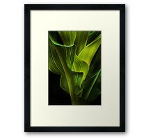 corn stalk Framed Print
