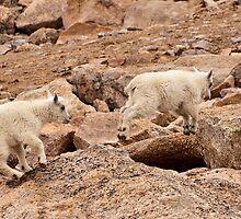 Anti-Gravity Goats by Jay Ryser