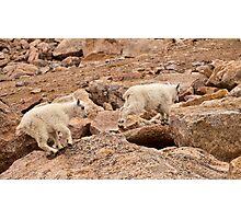 Anti-Gravity Goats Photographic Print