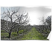 Orchard Poster