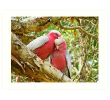 Pair of Galahs... Art Print