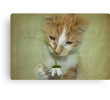 Playful Puss Canvas Print