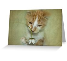 Playful Puss Greeting Card
