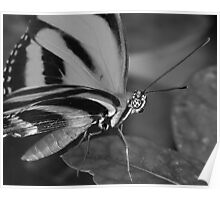 In black and white A BUTTERFLY Poster