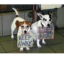 Keep Away - I Bite! Photographic Print