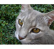 Earl eyes Photographic Print