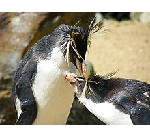 Cleaning and Preening Photographic Print