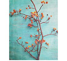 She Hung Her Dreams on Branches Photographic Print