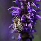 Bee On Purple Beauty by Deborah  Benoit