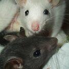 Rat babies by KanaShow