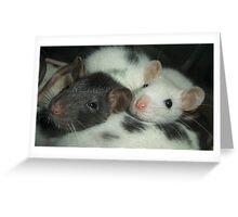 Cozy time on a dalmatian fur pillow. Greeting Card