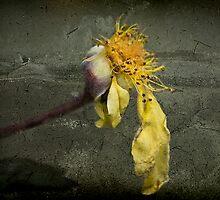 Rust 'n Roses ~ #9 by Rosalie Dale