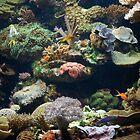 reef hq by Elise Lidgett