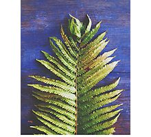 Woodland Fern Photographic Print