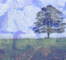 Stone, Tree, Sky. by Liz Findlay