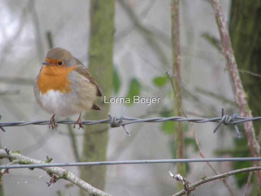 Red Robin by Lorna Boyer