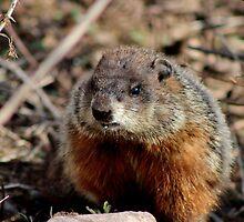 Groundhog II by Kathleen Daley