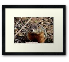 Groundhog II Framed Print