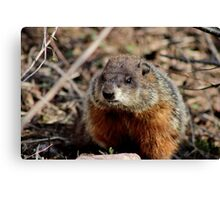 Groundhog II Canvas Print
