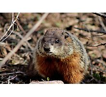 Groundhog II Photographic Print