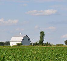 Barn Across the Road by mltrue