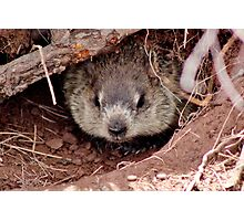 Groundhog III Photographic Print