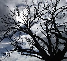 The Ominous Tree by Scott Babolka