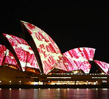 Lighting up the sails pink by samkoh