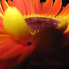 Yellow underbelly by sarah bragg