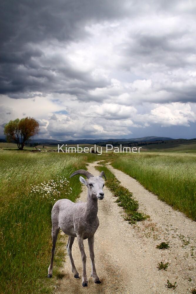 Rocky Mountain Bighorn Sheep by Kimberly Palmer