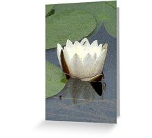 Lily Of The Water Greeting Card