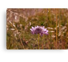 Flourishing flower Canvas Print