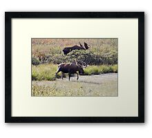 Two Bull Moose  - 11861 Framed Print