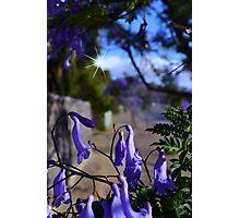 Magic of Spring Photographic Print