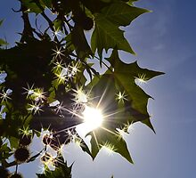 Sparkling leaves by Jeannie White