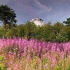 Wild flowers by zumi