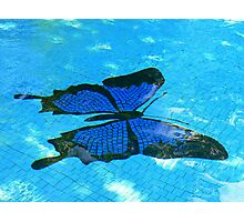 Ulysses Butterfly, Dunk Island Photographic Print