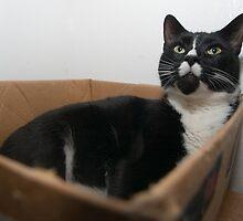 Box cat by Larry  Grayam