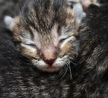 New Born by T. Thornton