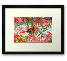 Monarch Among The Red Leaves Framed Print