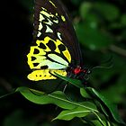 butterfly... by partyofive